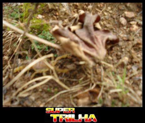 Trilhão de Porteirinha 177 2011-02-27 11.53.11